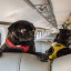 Personal Journeys: Pups Onboard: Why Trains Are a Great Way to Travel With Your Dog(s)