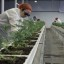 Pot stock Aurora says there's no agreement with Coca-Cola, but the shares are rising anyway